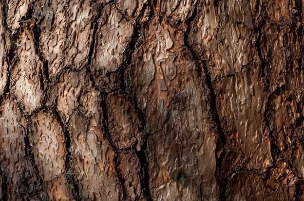 woodskin_looks_like_cui